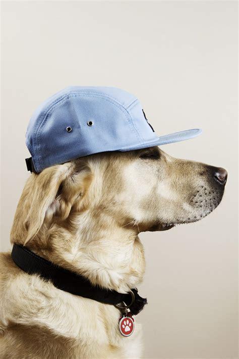 dogs  caps theinspirationcom