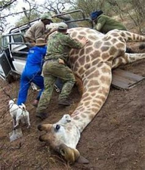 animal crueltyhunted images animal cruelty