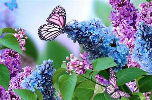 Spring Butterfly Wallpaper download - Butterfly HD ...