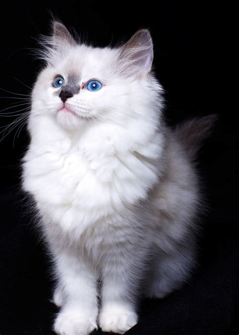 cute pets pictures gallery