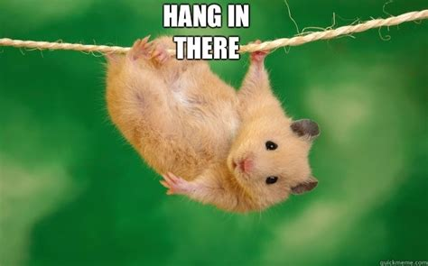 Hang In There Cat Meme - hang in there cat meme 28 images lots of brolove quickmeme hang in there hang in there