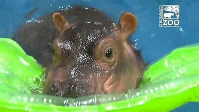 Hippo Adorable Down Syndrome Pool Dip Takes