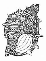 Coloring Seashell Mycoloring Printable Barracuda sketch template