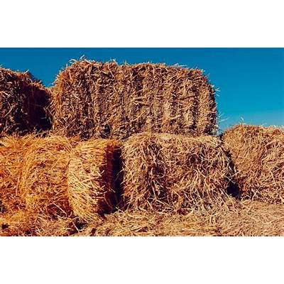 Champ II Haygrazer - SB Hay and Feed