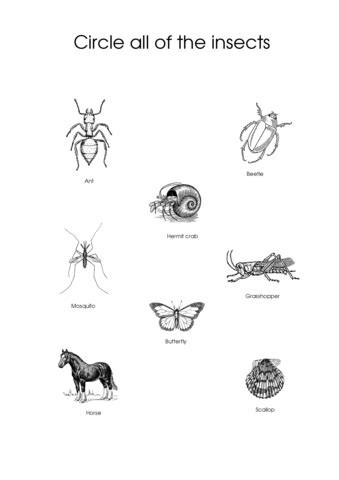 circle    insects worksheet  printable