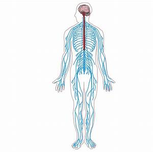 O Que  U00e9 Neuroci U00eancia