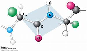 Kevin Ahern U0026 39 S Biochemistry  Bb 450  550  At Oregon State