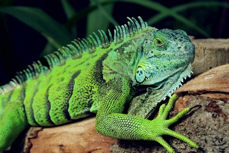 Green Reptile · Free Stock Photo