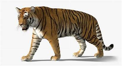 Tiger Fur Turbosquid Games