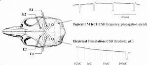 Experimental Setup For Electrophysiological Recordings