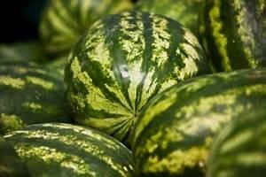 Wassermelone Anbau Balkon : melone veredeln so wird 39 s gemacht ~ Watch28wear.com Haus und Dekorationen