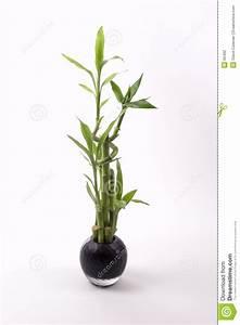 Bambus Pflege In Der Vase : bambus im schwarzen vase stockfotografie bild 65462 ~ Lizthompson.info Haus und Dekorationen