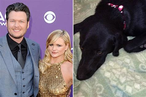 blake shelton dog miranda lambert and blake shelton s dog loretta goes missing