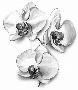 Orchids by artfullycreative on DeviantArt