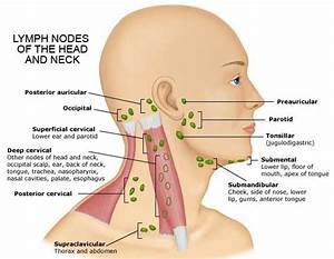 Submandibular Lymph Nodes