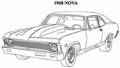 Coloring Muscle Classic Pages Nova