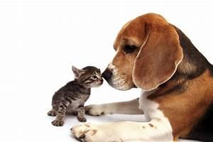 Haustiere Für Kinder : haustiere f r kinder kribbelbunt ~ Orissabook.com Haus und Dekorationen