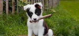 Bodenbelag Für Hunde Geeignet : trixie dog activity strategiespiele f r hunde im angebot ~ Lizthompson.info Haus und Dekorationen
