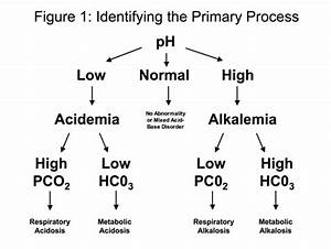 Arterial Blood Gas Primer- Clinical Respiratory Diseases  U0026 Critical Care Medicine  Seattle