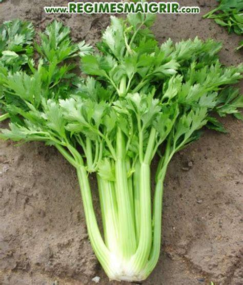 comment cuisiner le celeri comment cuisiner le celeri branche 28 images comment utiliser les feuilles de branches de c
