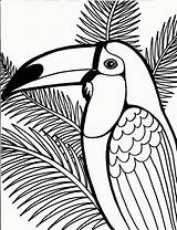 Parrot Coloring Pages Printable Animal Place sketch template