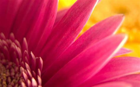 Pink Flower Widescreen Wallpapers