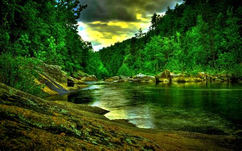 amazon rainforest wallpapers wallpaper cave