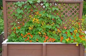 Jardinière Bois Leroy Merlin : jardini re treillis choix prix d 39 une jardini re ~ Dailycaller-alerts.com Idées de Décoration