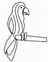 Papagei Perroquet Malvorlagen Loros Parkieten Bewegende Animaties Papagaai Pappagalli Kleurplaat Papegaai Kleurplaten Papegaaien Animierte Gify Papugi Malvorlagen1001 Papageien Papagaios Dibujar sketch template