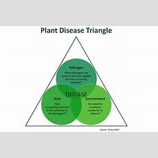 Soybeans 3 Numbers To Consider Before Spraying A
