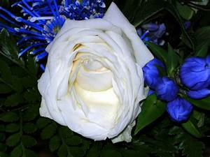 Fleur Rose Et Blanche : fleurs roses et blanches wu42 jornalagora ~ Dallasstarsshop.com Idées de Décoration