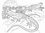 Lizard Coloring Pages Lizards Reptile Realistic Colouring Aboriginal Tongue Desert Printable Animals Basilisk Monitor Australian Gecko Wildlife Designs Reptiles Adult sketch template