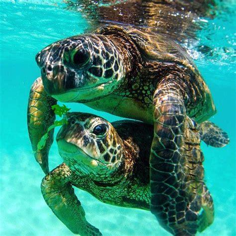 I had a little turtle. 127 best images about Clark Little's )(ONU on Pinterest ...