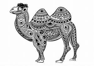 kamele dromedare 37732 kamele dromedare malbuch fur