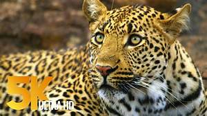 5k African Wildlife
