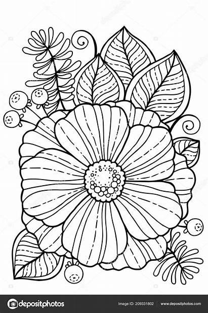 Colorear Flores Adultos Verano Elementos Aislado Libro