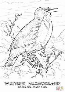 Nebraska State Bird Coloring Page Free Printable