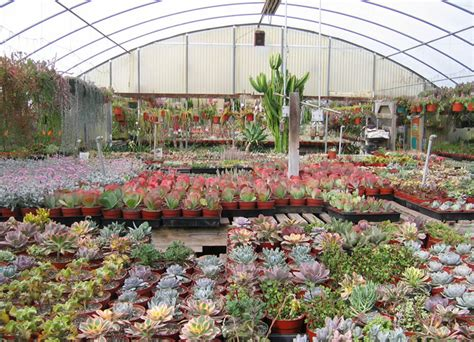 succulents nursery california nursery specialties cactus ranch cacti and succulents