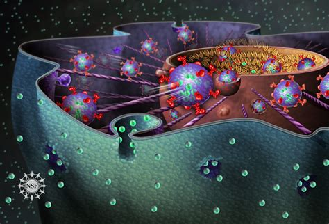 direct pathways    cells  cell