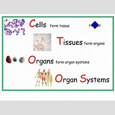 Smart Exchange  Usa  Cells Tissue Organ And Organ Systems