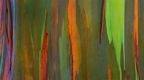 rainbow bark bing wallpaper