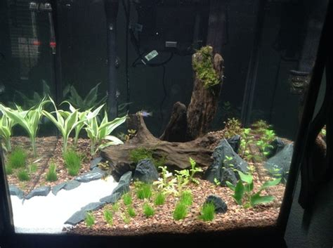 step by step guide for setting up a planted tank ratemyfishtank