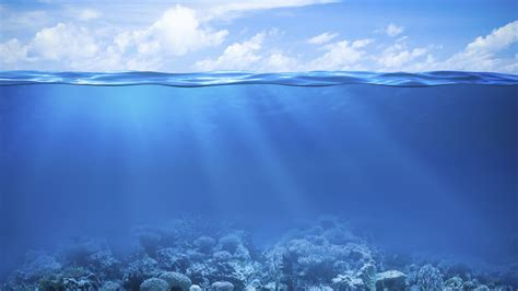 wallpaper coral reef   sea underwater hd