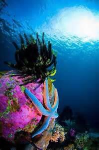 Underwater Star Coral Sea
