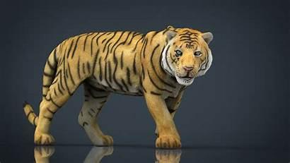 Tiger 3d Stl Models Animals Poly Low