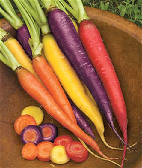 Carrot Varieties, Varieties of Carrots, Types of Carrots