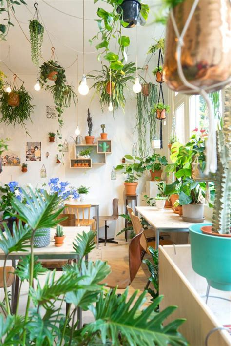 great ideas  display houseplants indoor plants decoration page    balcony garden web