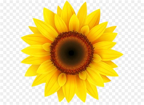 common sunflower pixel xcf sunflower png clipart picture