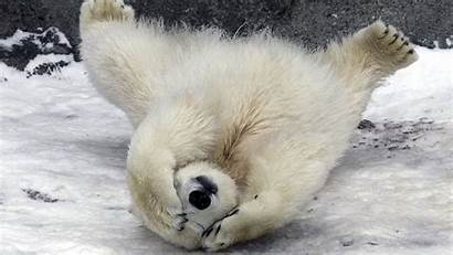 Funny Desktop Animal Backgrounds Animals Winter Background
