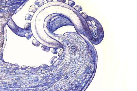 giant octopus drawn   discarded ballpoint pens